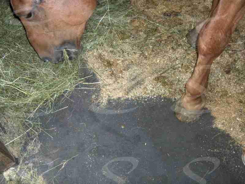 rivestimento box cavalli poliurea elastopol