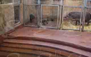rivestimento pavimenti zoo poliurea elastopol