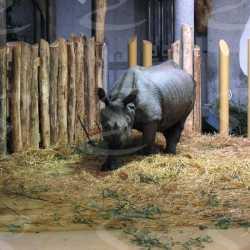 polyurea soft floor animals zoo