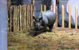 rivestimento pavimenti zoo vienna poliurea elastopol