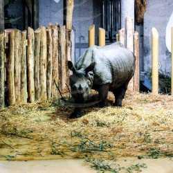 rivestimento pavimenti zoo vienna poliurea